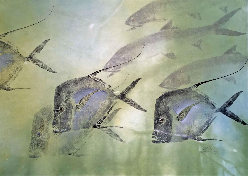 Michael Reimer Gyotaku Fish Prints Lookdowns and Ladyfish